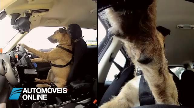 Insólito! Mande o seu cão para a escola de condução