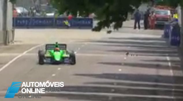 Vídeo! Corrida de Fórmula Indy interrompida por familia de Patos