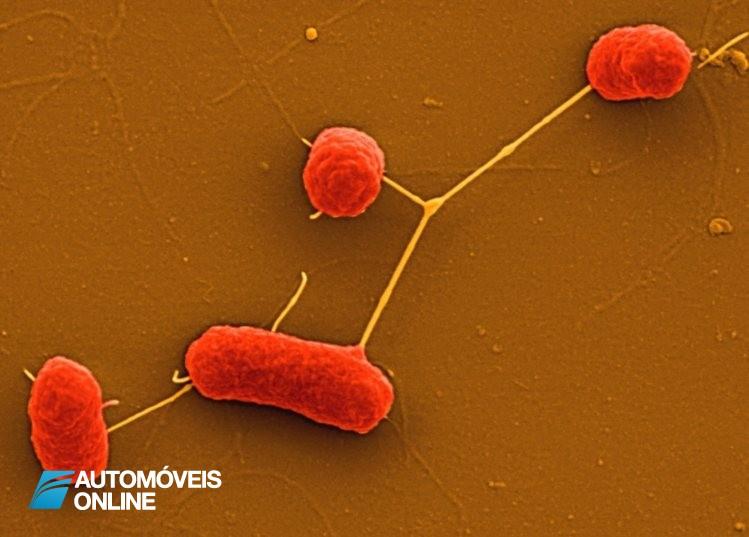 Chegou! A bactéria que produz gasolina