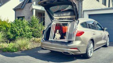 Sabe o que acontece ao seu cão em caso de acidente de viação?